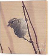 The Sideways Sparrow Wood Print