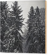 The Silent Season Wood Print