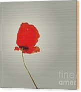 The Simple Poppy Wood Print