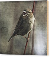 The Singing Sparrow Wood Print
