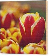 The Single Big Tulip Wood Print