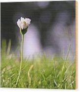 The Single Flower Wood Print