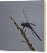 The Slaty Skimmer Wood Print