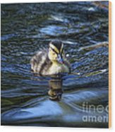 The Smallest Swimmer Wood Print