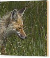 The Sneek Wood Print
