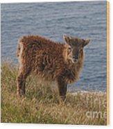 The Soay Sheep  Wood Print