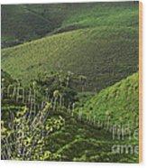 The Soft Hills Of Caizan Wood Print