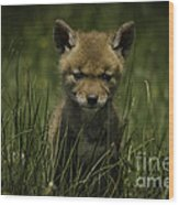 The Softer Side Of Nature Wood Print