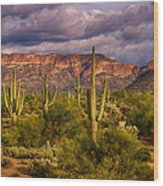 The Sonoran Golden Hour  Wood Print