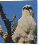 New Orleans  Southern Osprey Wood Print