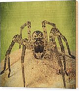 The Spider Series X Wood Print