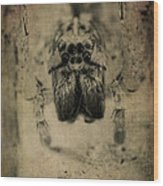 The Spider Series Xiii Wood Print