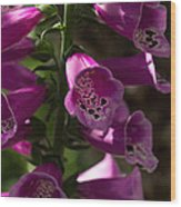 The Splendor Of Foxgloves Wood Print