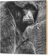 The Stare Wood Print