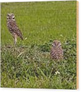 The Stares Of The Burrowing Owls Wood Print