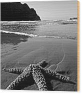 The Starfish Wood Print by Peter Tellone