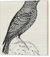 The Starling Wood Print