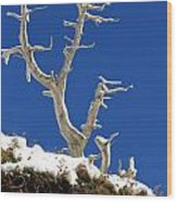 The Start Of Winter Wood Print