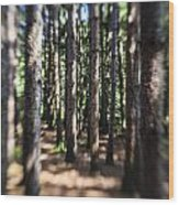 The Surreal Forest Wood Print
