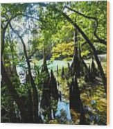 The Swamp By The Springs Wood Print by Julie Dant