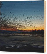 The Swarm Wood Print by Matt Molloy