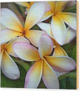 The Sweet Fragrance Of Plumeria Wood Print by Pamela Winders