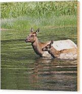 The Swim Wood Print