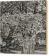 The Swinging Tree Sepia Wood Print