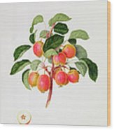 The Tartarian Crab Apple Wood Print by William Hooker