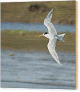 The Tern Sq Wood Print