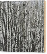 The Thicket Wood Print