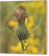The Thistle Wood Print