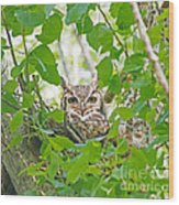 The Thoughtful Owl Wood Print