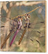 The Three Dragonflies  Wood Print