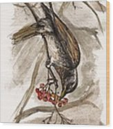 The Thrush Eating Cranberries Wood Print