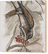 The Thrush Eating Cranberries Wood Print