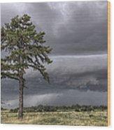 The Thunder Rolls - Storm - Pine Tree Wood Print by Jason Politte