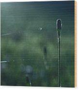 The Tightrope Walker  Wood Print