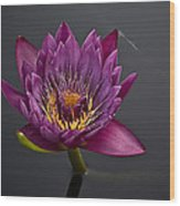 The Tiny Dragonfly On A Water Lily Wood Print