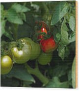 The Tomato Plant Wood Print