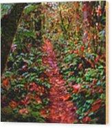 The Trail At Rainbow Falls Washington Wood Print