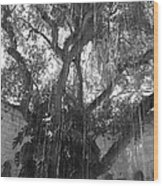 The Tree Vines Wood Print