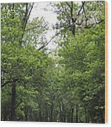 The Trees Of Illinois Wood Print