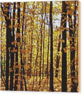The Trees Through The Forest Wood Print
