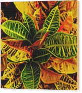 The Tropical Croton Wood Print by Lisa Cortez
