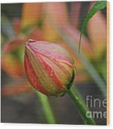 The Tulip Bud Wood Print