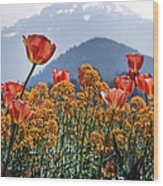 The Tulips In Bloom Wood Print