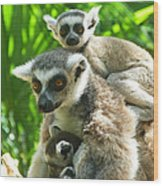 The Twins - Ring-tailed Lemurs Wood Print