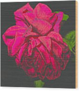 The Ultimate Red Rose Wood Print