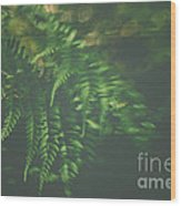 The Understory Wood Print
